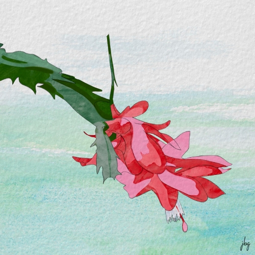 Digital watercolor drawing of a single branch and flower of a Christmas cactus