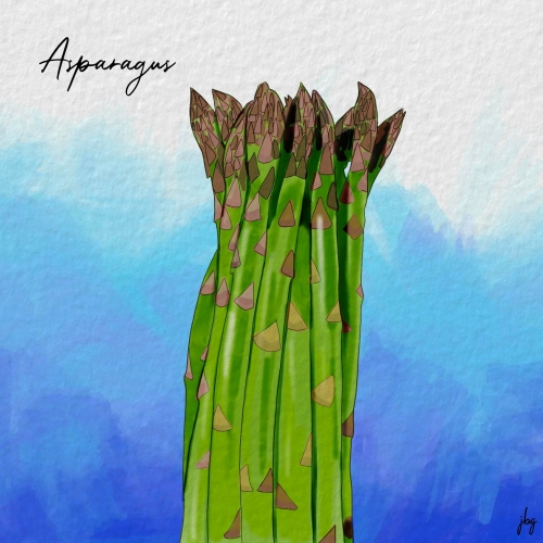 Digital watercolor drawing of a bundle of green asparagus against a brilliant blue background