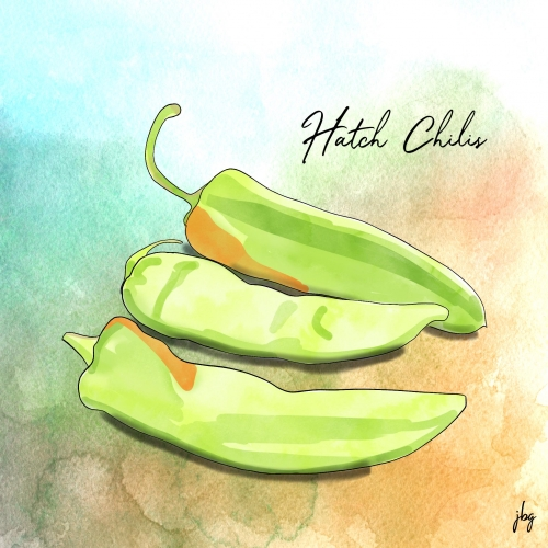 Digital watercolor drawing of Hatch chili peppers against a turquoise and orange watercolor background