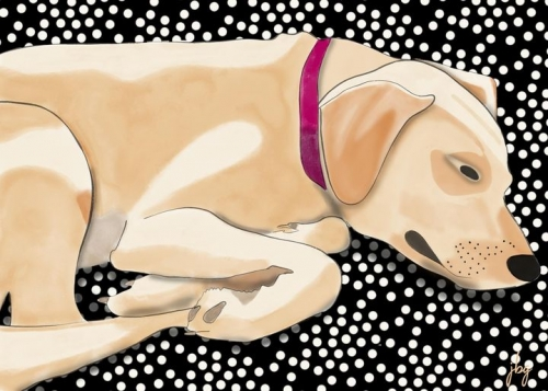 Watercolor drawing of Yellow Labrador Retriever Maggie resting on the sofa